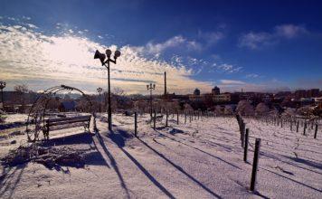 Zimowa Palmiarnia Zielona Góra