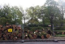 Wycinka drzew w parku przy ul. Partyzantów